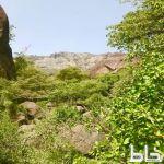 مناظر طبيعية من قرى آل جمال بني عمرو بمركز خاط