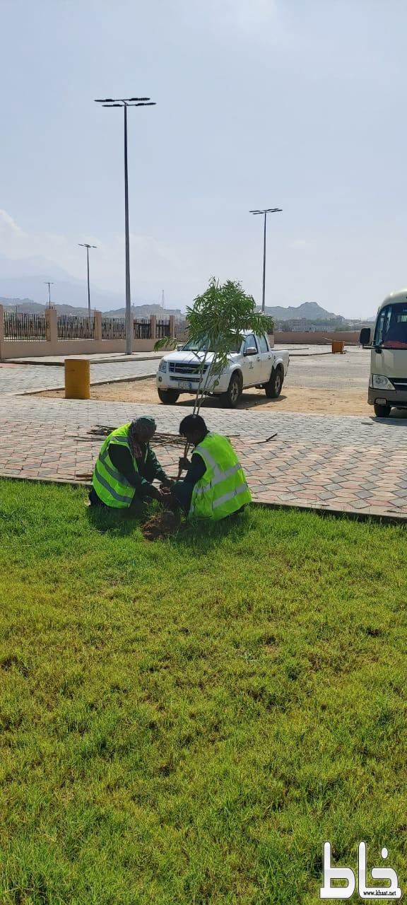 بلدية بارق تقوم بتشجير حدائق المنظر وتواصل معالجة التشوه البصري