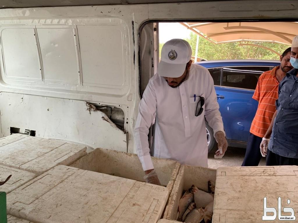 بلدية بارق تضبط ٦٠ كيلو من الأسماك الفاسدة