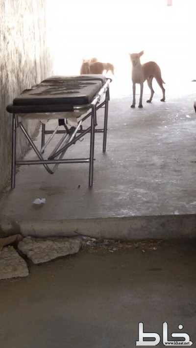 بعد هجوم الفئران مستشفى المجاردة  مأوى للكلاب الضالة.
